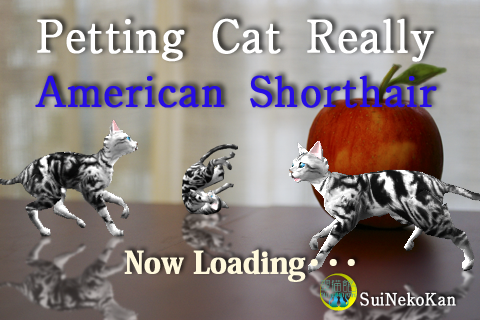 Screenshot American Shorthair Petting cat 3D REAL